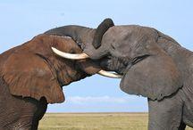 Africa Safari / by Big Five