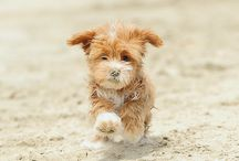 Fuzzy furry cuteness / I do believe the name says it all!  / by Carrie Dann