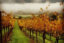 Wine Country Winter / by Rodney Strong Vineyards