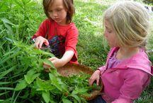 Herbal Education / by Herbal Roots zine