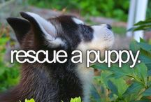 Who Rescued Who? / by PrideRock Wildlife Refuge