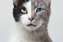 kitty Kat / by Anugrah Djiwa Wasito