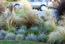 Grasses / by Richard Rock
