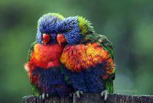 Bird watching / by Carole Pray