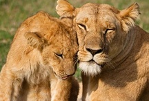 Happy Mother's Day! / by Rainforest Alliance