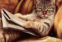 A Feline Point Of View / by Anita Crisp