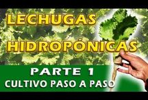 hidroponía - Vertical garden -  Container Gardening / hidroponía -  Container Gardening / by Miguel Navaza