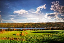 Fall Foliage {Finger Lakes Wine Country} / The beautiful fall foliage of Finger Lakes Wine Country, New York. / by Finger Lakes WineCountry