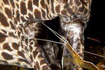 Strange animals / by Pedro Bretones Miguelez
