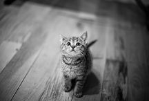 Beaux Animaux / by Ombeline Brun