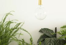 Indoor garden / by Jen Murnaghan