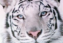 Wild Cats (^||^) / by Wanda Suggs