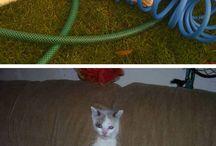 cats & cutes / by Tânia Brugni