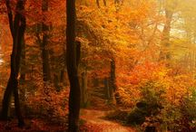 Autumn Splendor / Autumn is a second spring when every leaf is a flower.  ~Albert Camus / by Sara Hemenway