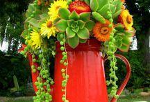 cactus y suculentas!! / by Virginia González