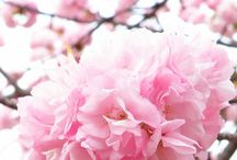 Spring / by Kimberly Parsons