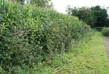 Living Fences / One thousand years older than chain link. / by Pasture Builders