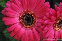 Flora / by Joyce Nolt
