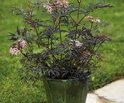 Annuals / by Cedar Valley Arboretum