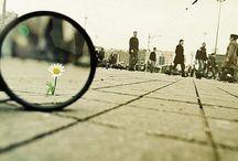 .:fuggevole:. / +flower+ / by Kyoco