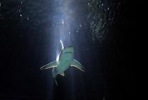 Pinteresting news / by Shark Defenders