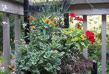 garden ideas (or just really pretty) / by Betty Poynter
