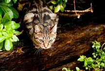 ☚(ᵔᴥᵔ)☛Animals of New Home ☚(=^.^=)☛ / ☛Dogs(ᵔᴥᵔ)☚ and ☛(=^.^=)Cats☚  / by Irena Ka