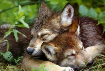 Dreamin  / by PrideRock Wildlife Refuge