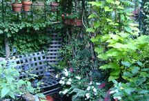 Gardens / by Mary Buek