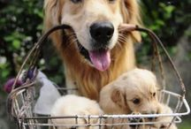 puppy love / by Marybeth