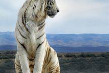 animals / by Amber Harris