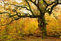 fall / by Vivian Falconary