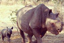 Volunteer in Victoria Falls / International Volunteer HQ (IVHQ) offers a Wildlife Conservation project for volunteer travelers in Victoria Falls. / by International Volunteer HQ