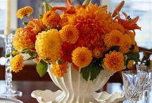 Flowers / by Alana Buckley