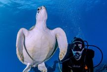 Scuba Diving Photos August 2014 / by PADI