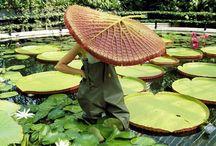 Kew / by Liz Hood