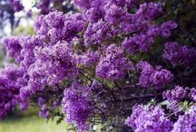 Flowers / by Angela Franklin