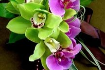 ORCHIDS / by Tracy Moreau