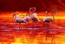 flamingos / by Retha Venter