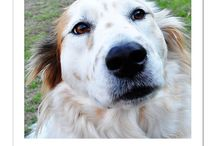 Dog Quotes / Famous quotations about dogs. / by Paris Permenter