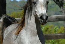 Horses / by Stacy Patton