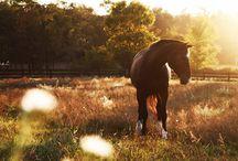 Horses / by Elyssa Reisman