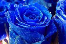 Royal Blue :)  / by LaTanya Tatum