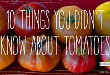 Heirloom Tomato Festival / by Kendall-Jackson Wines