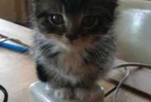 Kitties!  / by Bethany Lingerfelt