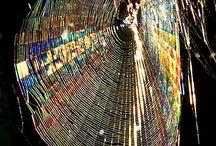 Cob Webs / by Patty Austin