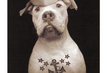 Dog-umentaries / by Cheryl Burney
