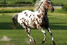 The Horse... just beautiful! / by Sue Jasinski-Guccione