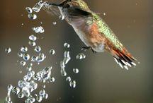 Birds / by Falk Hedemann