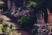 Garden  / by Jennifer Borrego